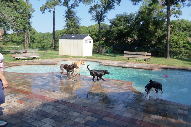 Amelia Island Dog Park